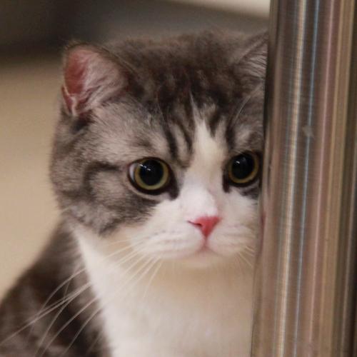 猫咪吃饭高清头像
