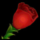 红玫瑰(180天)