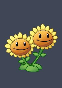 双头向日葵